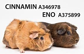 EnoCinnamon
