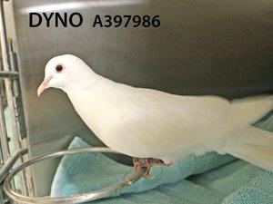 ADopt Dyno