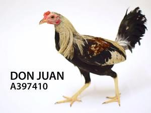 Adopt Don Juan
