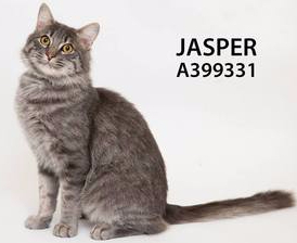 ADopt Jasper2