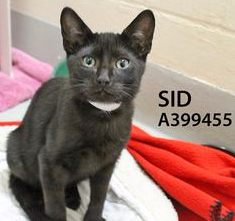 ADopt Sid and Sally