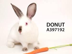 Adopt Donut