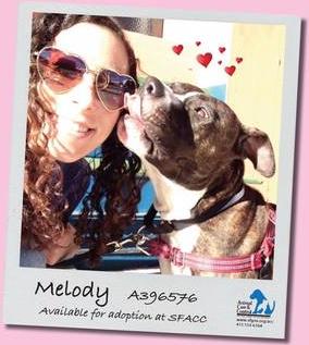 Adopt Melody2