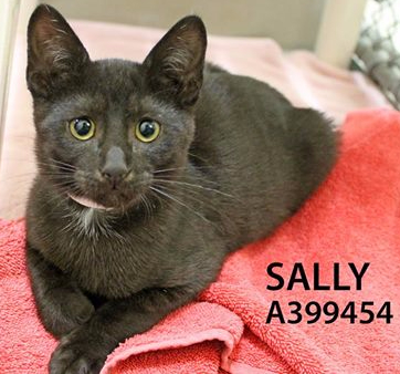 Adopt Sally