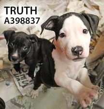 Adopt Truth
