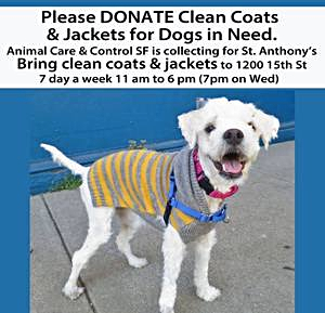 Dog Coat SFACC