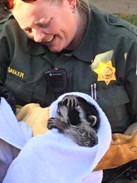 Raccoon rescue1