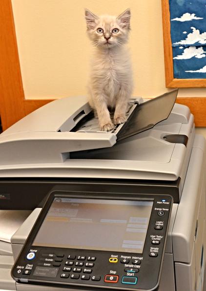 kittycopier