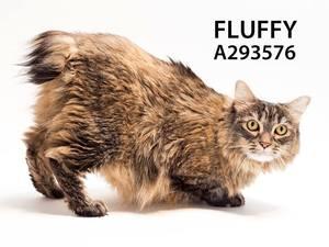 AdoptFluffy