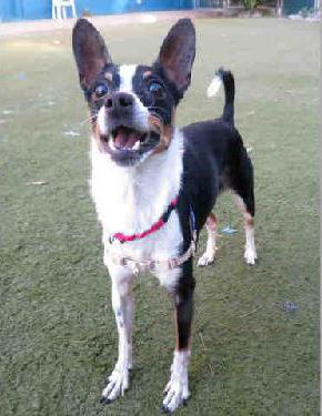 Audrey for adoption