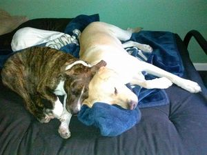 PQ and Atlas cuddling