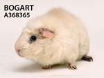 BogartAdopted