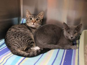 Adopt Sierra and Olive