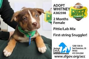 Adopt Whitney