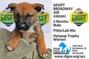 Puppy Bowl Broadway Joe