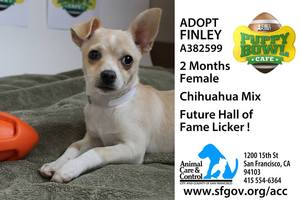 Puppy Bowl Finley