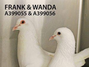 Adopt Frank and Wanda