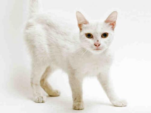 Snow White for adoption 2