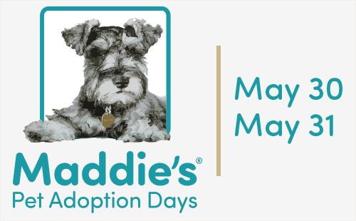 Maddies 2015 logo