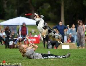 Disc Dogs wow