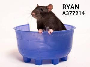 RyanAndOwenforadoption