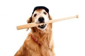 Baseball-Dog-300x199