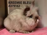 Kreemie Bleu